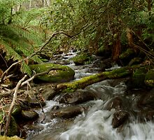 Mountain Stream by PhysioDave