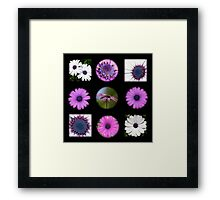 African Daisy Collage on Black Framed Print