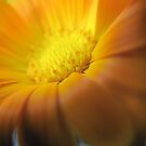 Golden October Flower by Pamela Jayne Smith