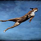 Flying Boxer by boxerportraits