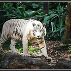 White Tiger by Adri  Padmos