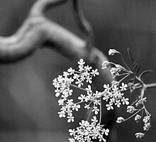 black/white/still. by heartwork
