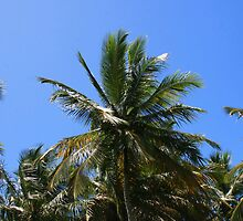trancoso's cocconut-tree by momarch