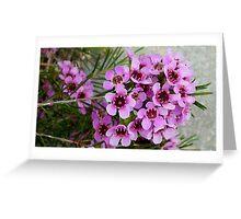 Geraldton Wax Greeting Card