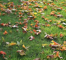 Bright leaves on green grass by warmchocmilk