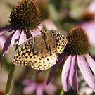 Butterfly Resting by John Weakly