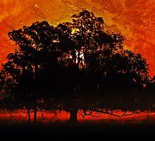 Burning Tree by Stephen Warren