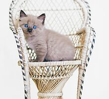Awwdorable Seal Point Kitten In Wicker Chair - Animal Rescue Portraits by AndreaBorden