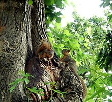 YOUNG SQUIRRELS by Sandra  Aguirre