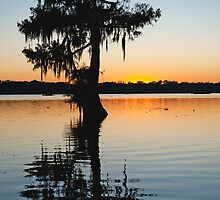 Louisiana Cypress Sunset by Bonnie T.  Barry