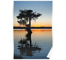 Louisiana Cypress Sunset Poster