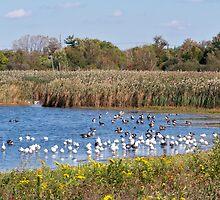 The Goose Migration by Dandelion Dilluvio
