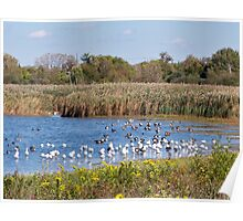 The Goose Migration Poster