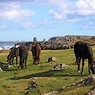 Bonavista Grazing by Brian Carey