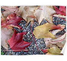 Leaves on Gravel Path Poster
