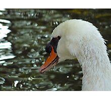 il Cigno (The Swan) Photographic Print
