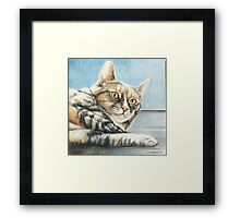 Tabby in the Sun Framed Print