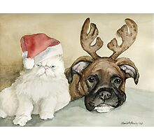 Boxer and Persian Cat Christmas Photographic Print