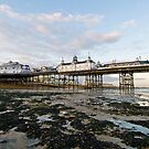 Pier - Low Tide - Starlings Flock by Pete Costick