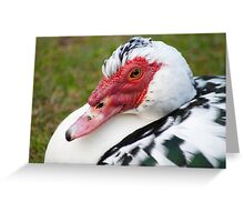 Muscovy Duck (Ely) Greeting Card