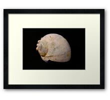 Old beat up Sea Shell Framed Print
