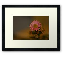 Pretty Petal Framed Print