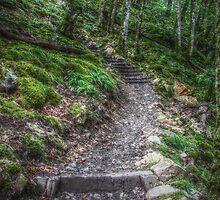 The Path by Keith Trivett