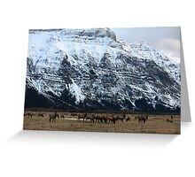 Elk Herd at Waterton Greeting Card