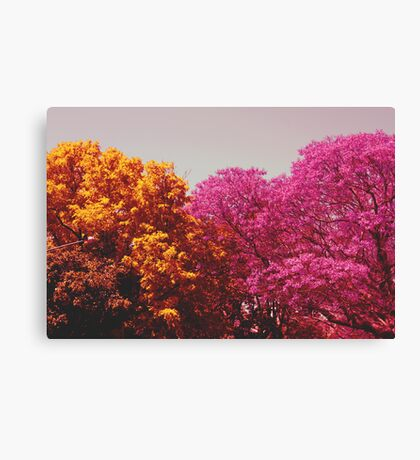 two colours Canvas Print