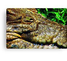 Crocodile Smile Canvas Print