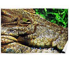 Crocodile Smile Poster