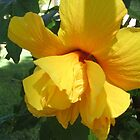 Golden Hibiscus Flower by EmmaS-P