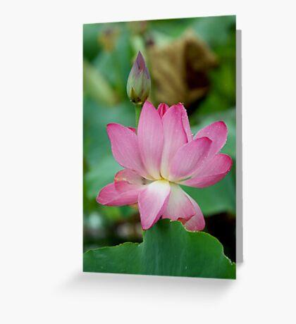 The Lovely Lotus - Mareeba Wetlands Greeting Card