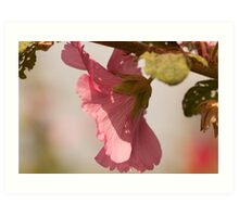 pale pink flowers blossom Art Print