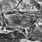 Emerald Creek by bettyb