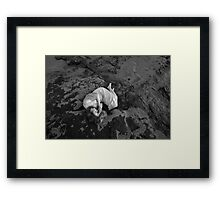 drowning was her sleep Framed Print