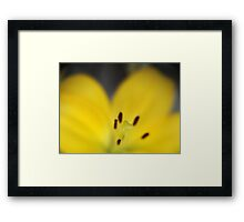 Yellow Stamen with Lensbaby  Framed Print