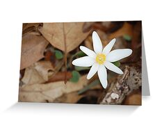 Glimmer of Spring Greeting Card