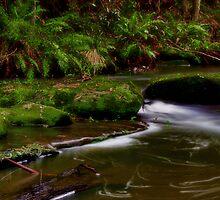 """Rainforest Symphony"" by Phil Thomson IPA"