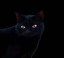 Cat with red eyes by Franghin