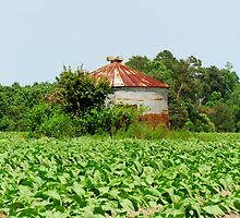 Silo In The Middle Of A Field by Cynthia48