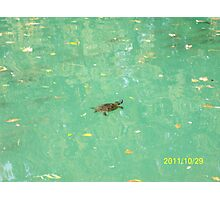 Una tartaruga nel Laghetto di Maria Luigia...Parma - Italy - 2000 visualizz.al 30 maggio 2015 -- featured rb explore 2 febbraio 2012 --- Photographic Print