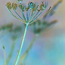 Cow Parsley by Sarah-Jane Covey