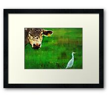 you gotta love a cow and his egret : Charolais Cattle  Framed Print