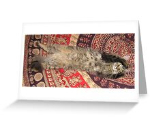Fluffy stretching gray cat with furry belly Greeting Card