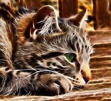 Cat's Eye by Susie Peek