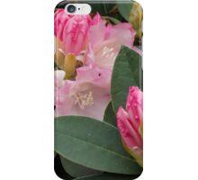 Rhodedendron iPhone Case/Skin
