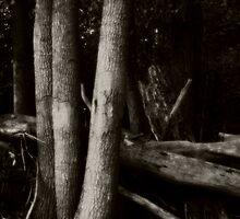 Trees on Grass Island  by MLabuda