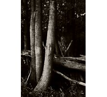 Trees on Grass Island  Photographic Print