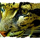 Clouded Leopard by IKeepScreaming